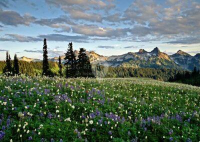 Mount Rainier National Park and the Tatoosh Range, Washington