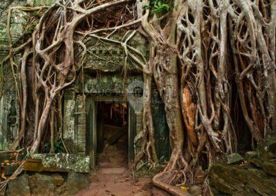 Ta Phrom, Angkor Archeological Park, Cambodia